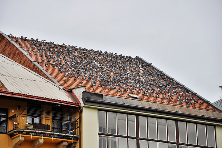 A2B Pest Control are able to install spikes to deter birds from roofs in Cardiff.