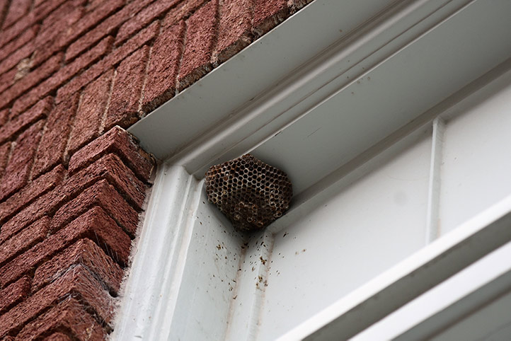 We provide a wasp nest removal service for domestic and commercial properties in Cardiff.